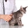 Ветеринарные клиники в Томари